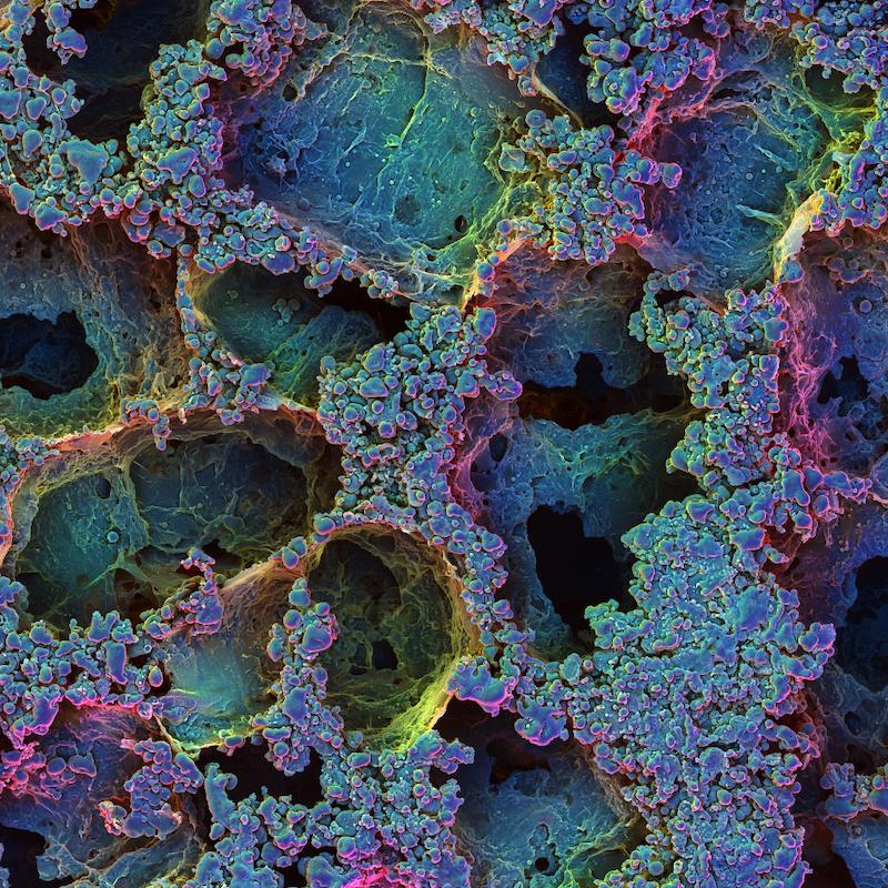 Risultati immagini per T cell traps wyss