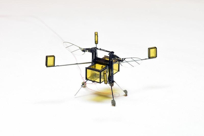 Aerial-Aquatic-Microrobot-on-land.jpeg?w=800&h=534&auto=format&q=90&fit=crop&crop=faces%2Centropy