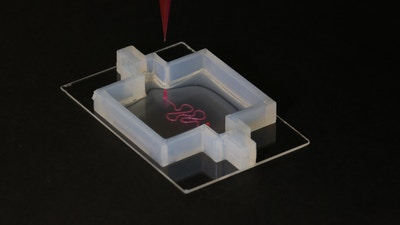 09/15/2016 Cambridge, MA. Harvard University. This image shows a custom designed 3D printed nephron used in kidney tissue research, which is conducted by Dr. Kim Homan and Dr. David Kolesky, both members of Professor Jennifer Lewis's laboratory at Harvard University.  Lori K. Sanders/Harvard University